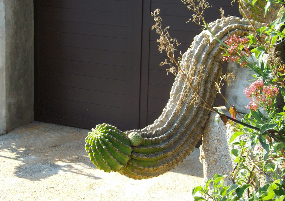 https://s27107.pcdn.co/wp-content/uploads/2017/08/cactus.png