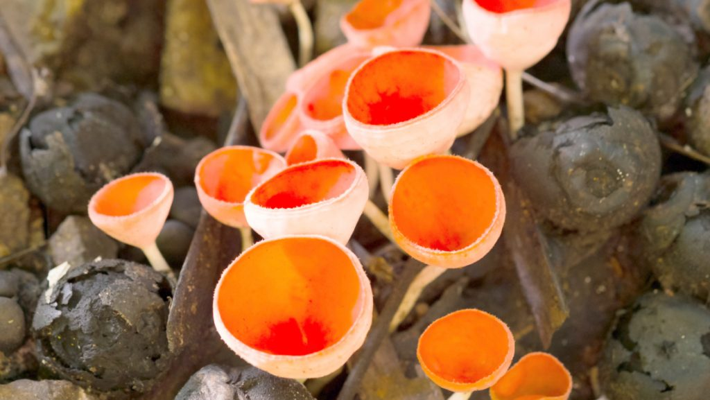 Fungi also gives us fun foods, like beer and pizza.