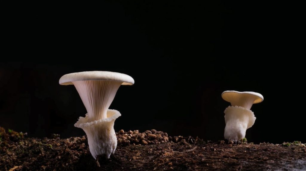 Fungi have adapted to changing global temperatures.