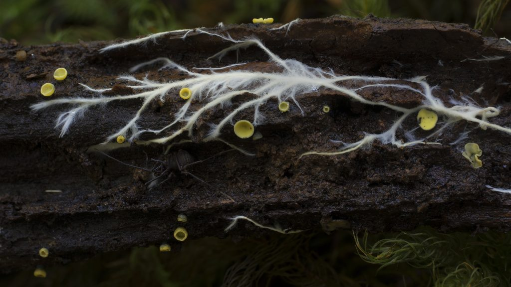Fungus grows on a branch.