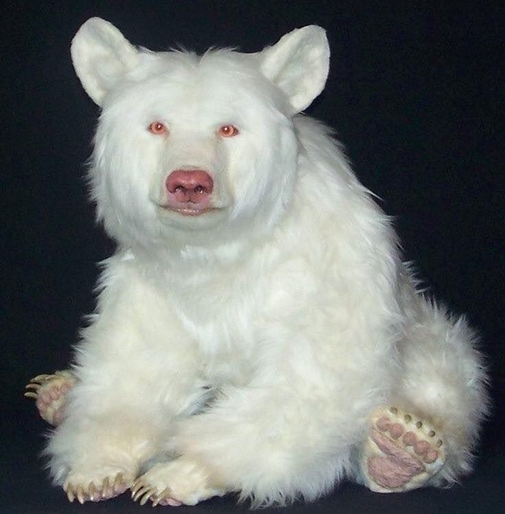 Extremely Rare White-as-Snow and Albino Animals